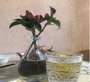 餐桌上适合放什么植物【今日信息】
